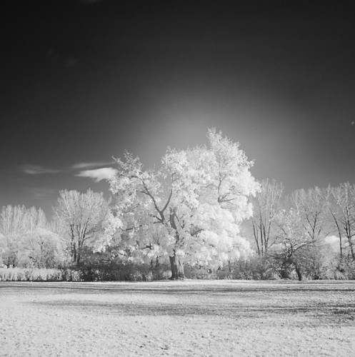 infrared in the park