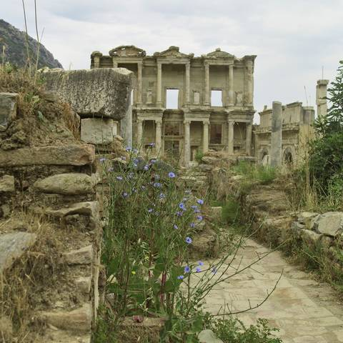 Cornflowers and Celsus Library, Ephesus